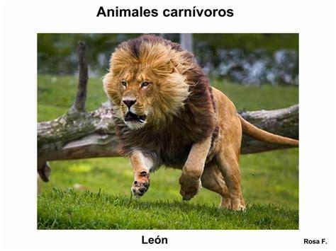 imagenes animales carnivoros para imprimir maestra de primaria animales carn 237 voros vocabulario en