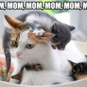 mothers day meme cute cute cats pinterest meme cat