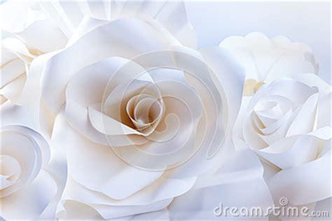 rosas blancas hermosas en el fondo blanco imagenes de archivo imagen 32231204