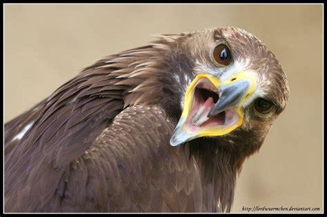 beautiful eagle desktop wallpapers colorlava