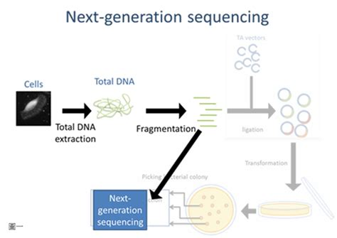The Templates For Next Generation Sequencing Are Flash Card by Illumina Genome Analyzer V S Sanger Sequencing 有勁的生技