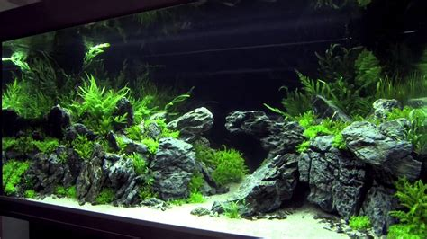 aquascape contest xl tanks of the aquascaping contest quot the art of the planted aquarium quot 2014 pt 2 of 3