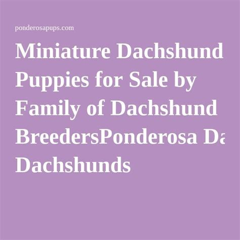 dachshund puppies for sale in ma 25 best ideas about miniature dachshund for sale on daschund puppies for