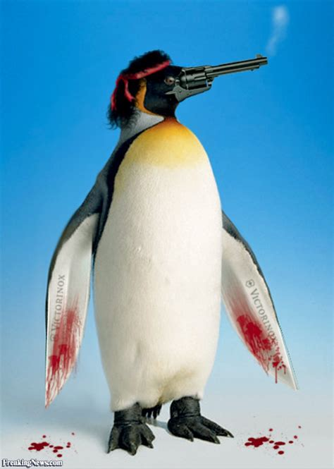 with a penguin with a gun beak pictures freaking news
