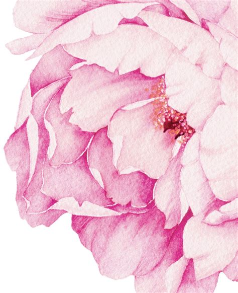 sticker by number beautiful botanicals 12 floral designs to sticker with 12 mindful exercises books peony flowers wall sticker watercolor peony wall stickers