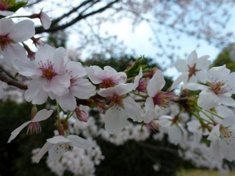Sk Ii Di Jepang di jepang kehidupan di jepang