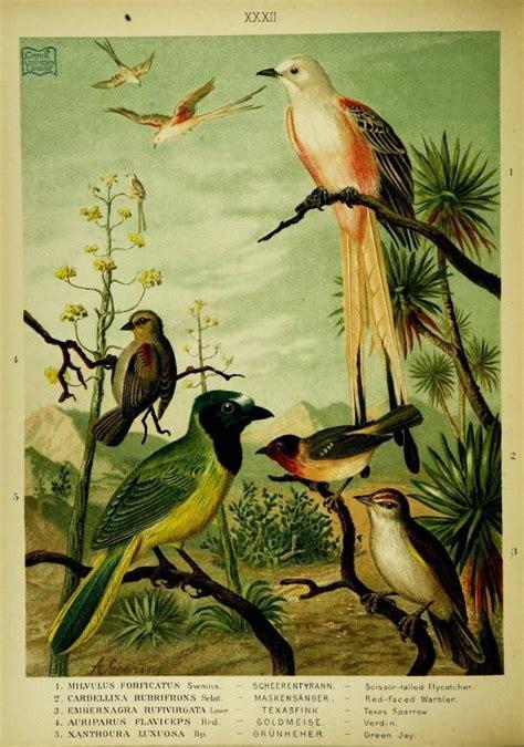 histories of american cuckoos goatsuckers hummingbirds and their allies orders psittaciformes cuculiformes trogoniformes and micropodiiformes classic reprint books 7 best birds fuglar images on audubon birds