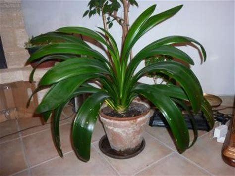 Plante D Appartement D Origine Tropicale by Identifier Identification De Plante D Int 233 Rieur