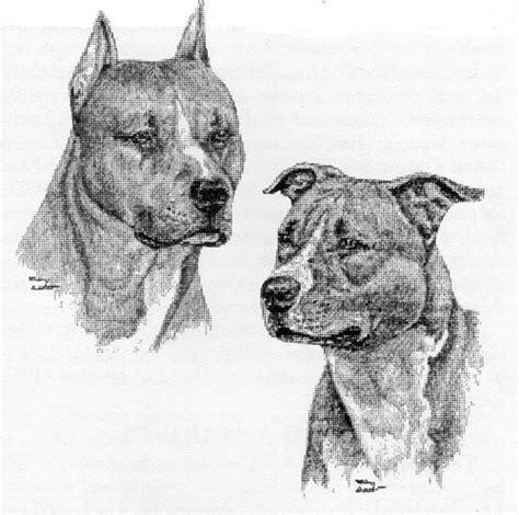 american pit bull terrier united kennel club ukc breed standards american pit bull terrier united