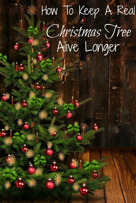 how to preserve an xmas tree how to keep a real tree alive longer just 2