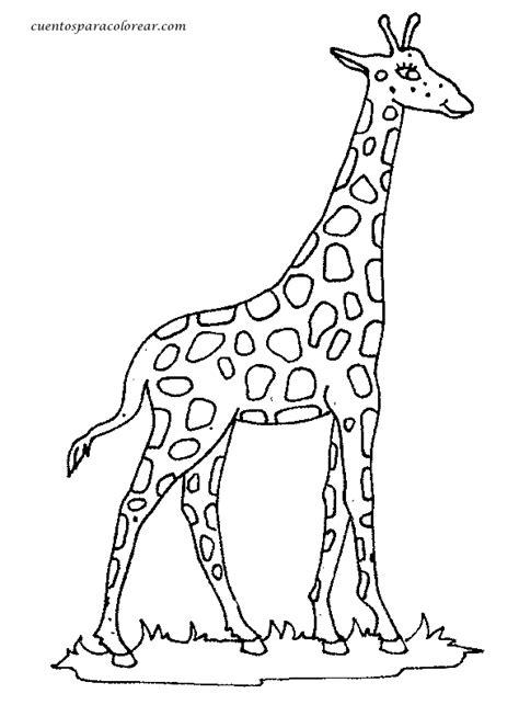 imagenes de jirafas para ninos dibujos para colorear jirafas