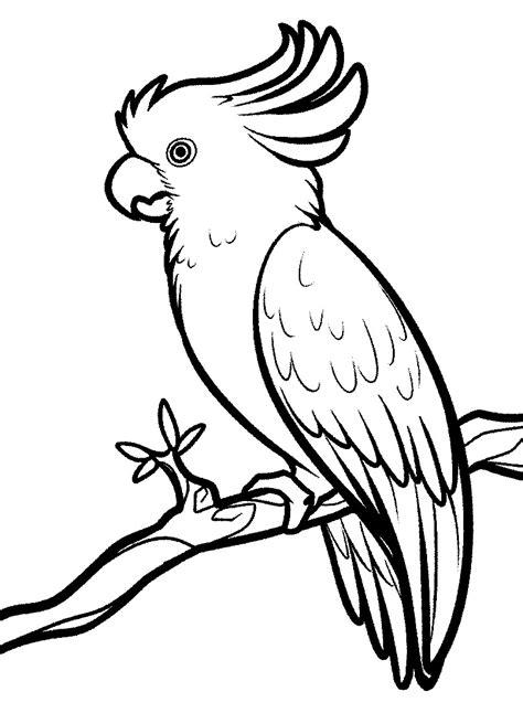 Cara Mewarnai Gambar Burung Beo Animasi Bergerak Mewarnai Burung Dara Merpati Gambar Elang Mewarnai