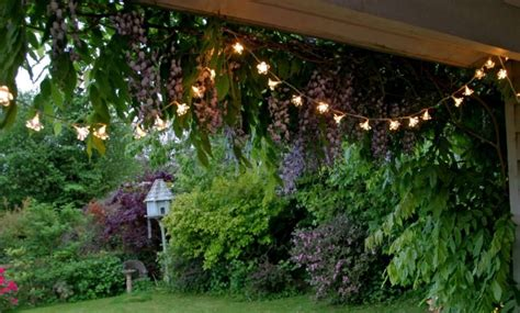 outdoor garden ideas on a budget 17 best garden ideas on gardening gardening and