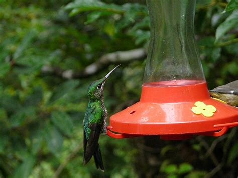 how to keep ants out of hummingbird feeders garden guides