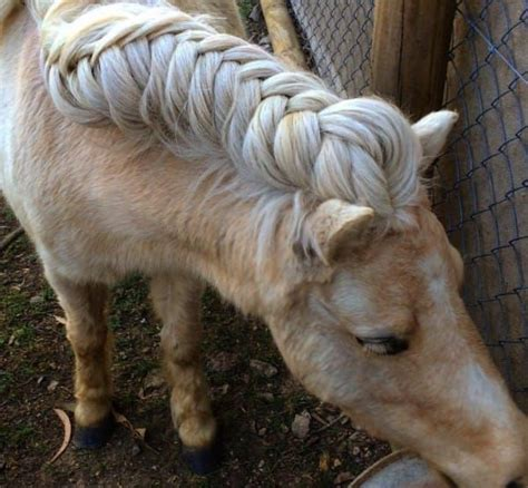 hairstyles for horses 15 best ideas about horse hair styles on pinterest