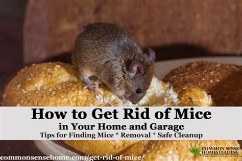 how to get a rat out of your house the best ways get rid of mice in your house and garage