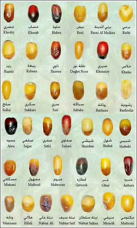 different types of 38 types of dates to your fast with ilmfeed