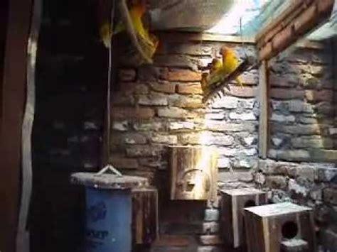 Pakan Burung Box Ebod Lovebird Box budidaya burung lovebird secara koloni lebih mudah