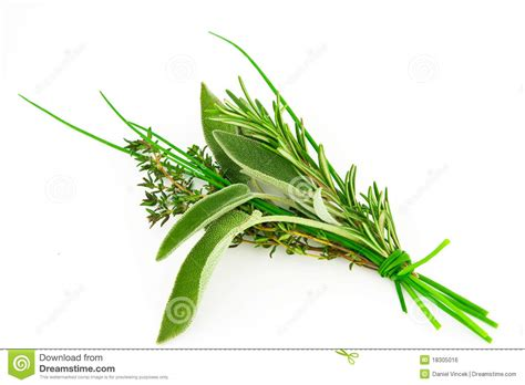 hanging bunches of fresh spicy herbs isolated on white bunch of fresh herbs royalty free stock image image