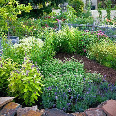 4 easy care flower beds summer flowers herbal teas and teas
