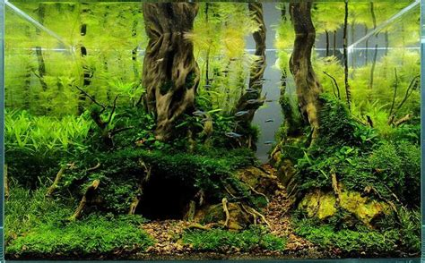 aquascaping with driftwood pin by jen ness on tanked pinterest