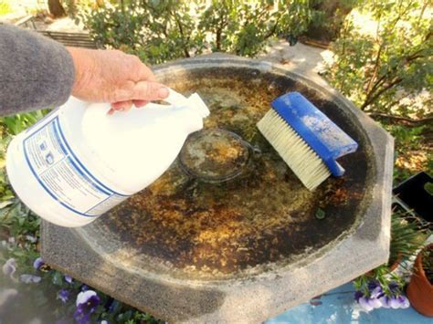 easy steps to a clean birdbath flea market gardening