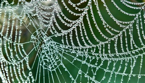 spider web inspired implant could change insulin delivery