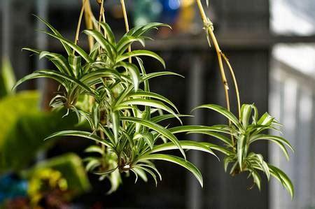 plants that survive with no light 5 piante da coltivare in ufficio e 5 buoni motivi per