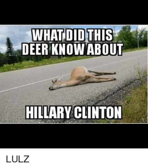 What About Meme - what did this deer know about hillary clinton lulz deer