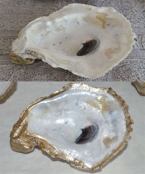 oyster shell diy oyster shell dishes domestic wannabe