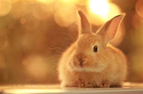 7 Facts On Bunny Rabbits by Rabbit Facts Interesting Rabbit Facts For Rabbits