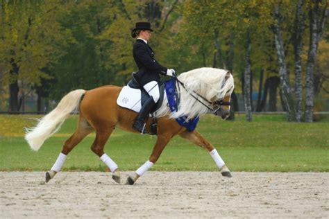 billige häuser zum kauf so finden sie das passende pferd oder pony bei cavallo de