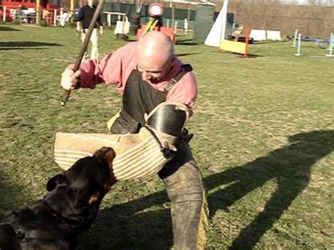 the hammer why dogs attack us and how to prevent it books rottweiler attack ipo