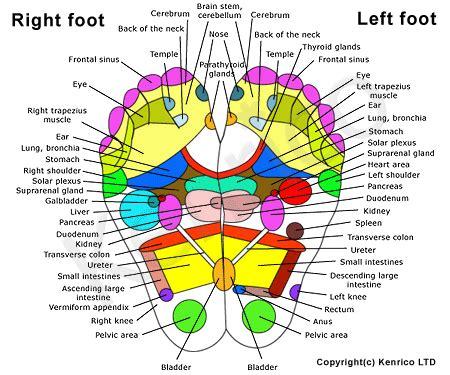 reflexology diagram of foot reflexology chart for the foot reflexology