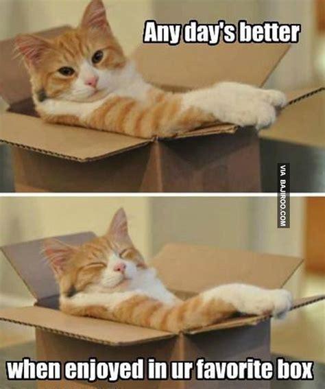 meme box when enjoyed in ur favorite box meme