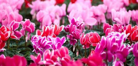 fiori per i 18 anni fiori per compleanno 18 anni vb12 pineglen