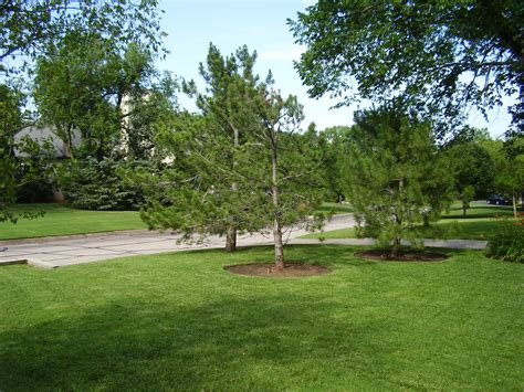 lawn and landscape lawn maintenance and cityscapes lawn landscape services