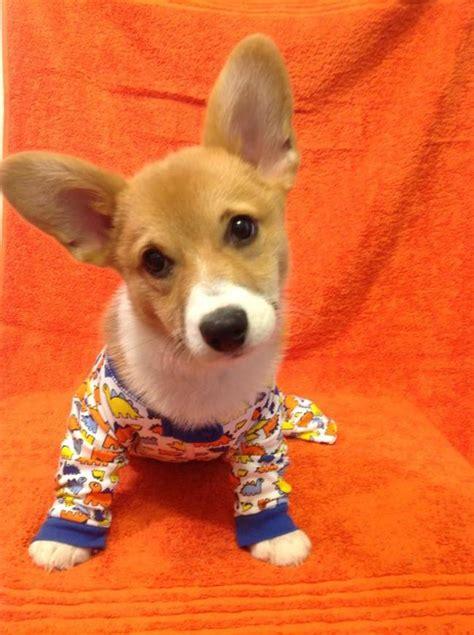 puppies in pajamas dogs in pajamas the pajama company