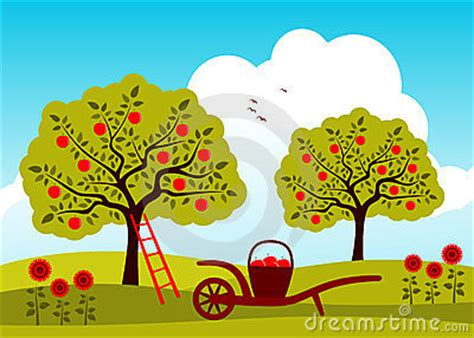 apple orchard apple tree orchard royalty free stock photos image 23775778