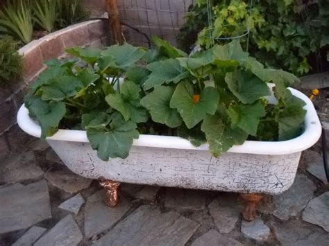 bathtub planters the 9 best images about bathtub planters on pinterest