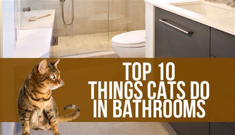 10 things cats do in the bathroom petcha