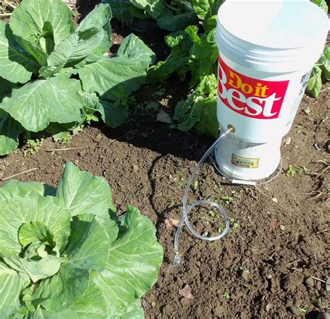 diy drip irrigation system for container gardening buddy if you have a few buckets you can use them these 13 ways