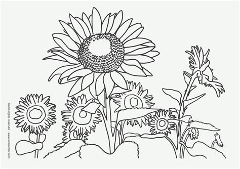 Easy Pencil Of Nature Coloring Pages Coloring Pages Nature
