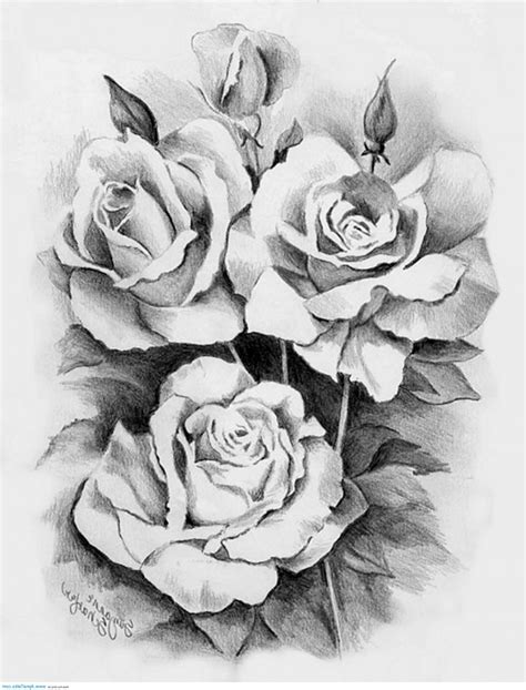 3 roses tattoos 10 white sles and design ideas
