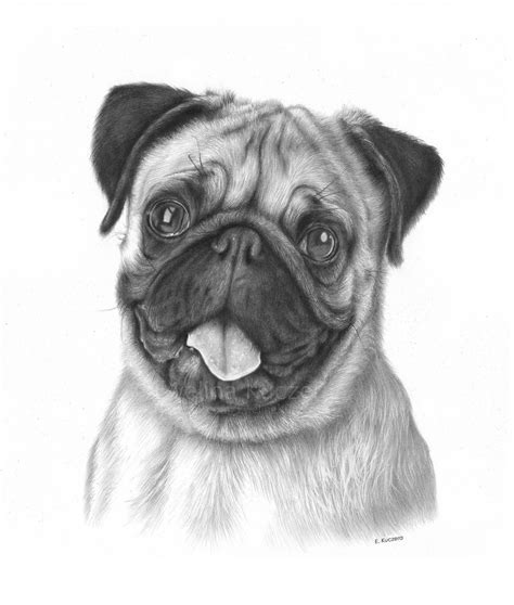 pug sketch pug drawing by kot filemon on deviantart