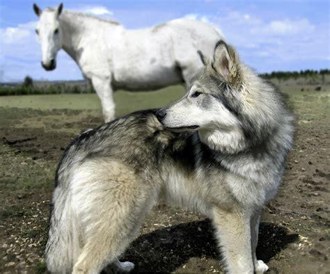 wolf and stilltrippinouts stuff page