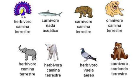 imagenes de animales por su alimentacion animales seg 218 n su alimentaci 211 n