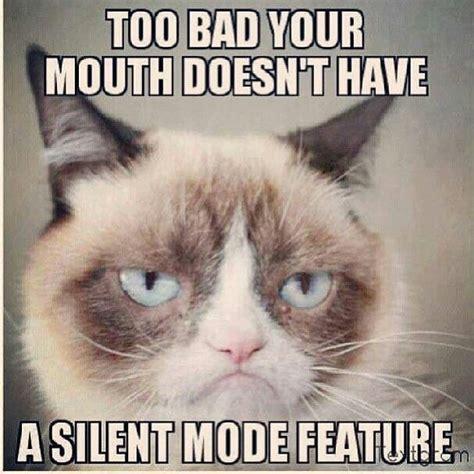 Middle Finger Cat Meme - 618 best images about classy sassy a bit smart assy