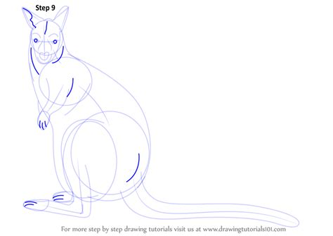 wallaby tutorial learn how to draw a bennett s wallaby wild animals step
