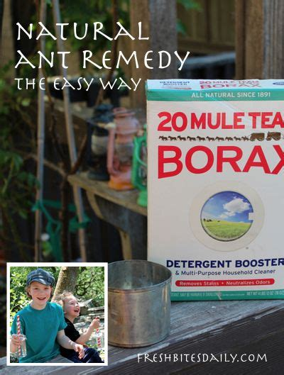 natural remedy for ants in the home kitchen lawn or